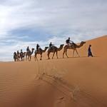 Désert marocain-maroc- chameau-dune-tourisme solidaire-au coeur des peuples