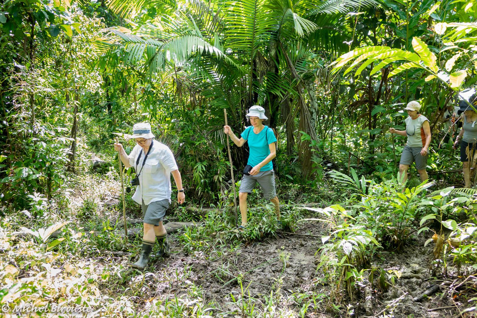 Indonesie-randonnee-balade-jungle-nature